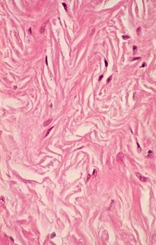 histology a560